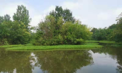 中一、二支行洪道黑臭水体生态治理